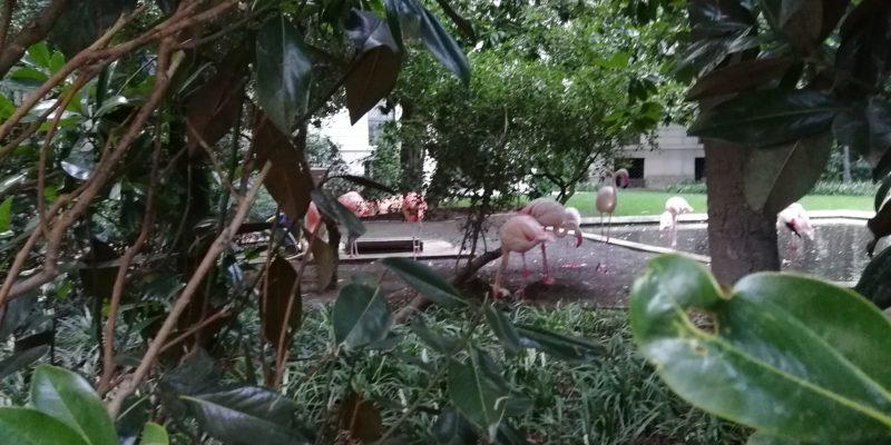 I fenicotteri di Villa Invernizzi