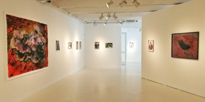 Una esposizione alla Galleria Carla Sozzani